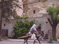 Village Lady on a Donkey